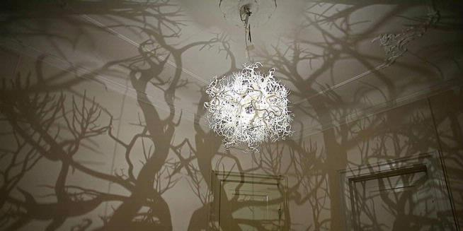 Forms in Nature Lamp