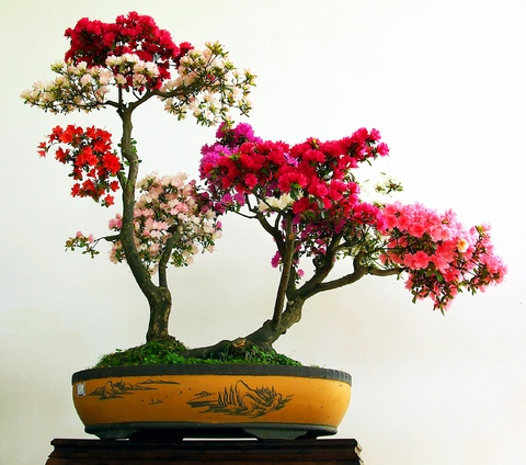 Bonsai planters for gardening